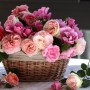 cvety-rozy-korzinka-640433